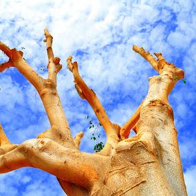 Single tree..... :-) by Ana Wisniewska - Nature Up Close Trees & Bushes