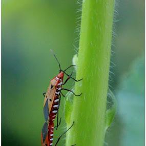 Mating season  by Debapriya Bhattacharya - Animals Insects & Spiders