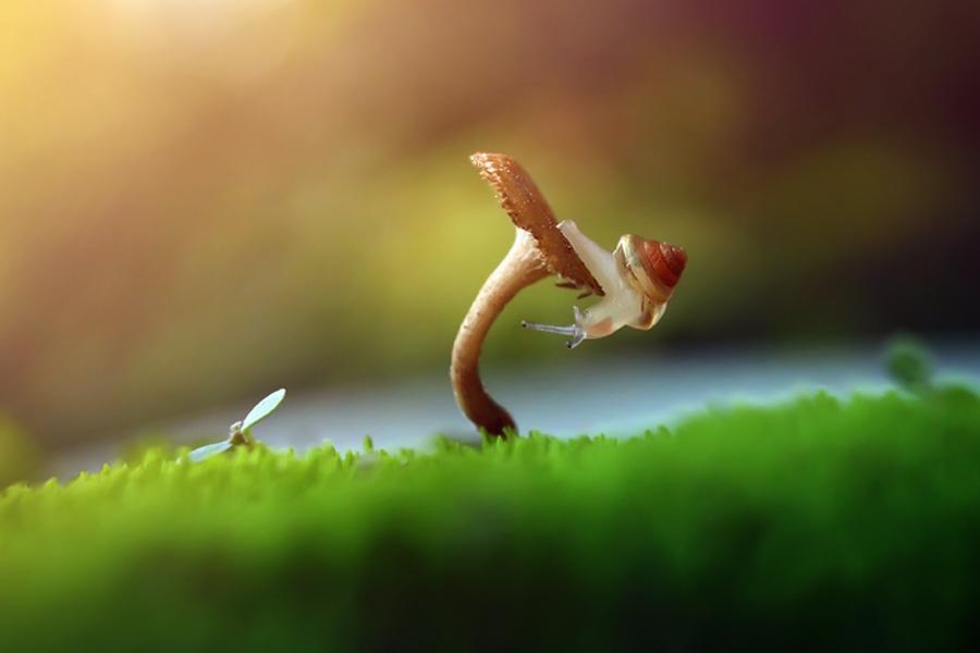 gesture by Dhimas Prastowo - Digital Art Animals ( #mushroom, #art, #animal, #snail, #macro )