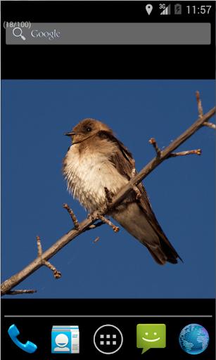 Sparrow Live Wallpaper