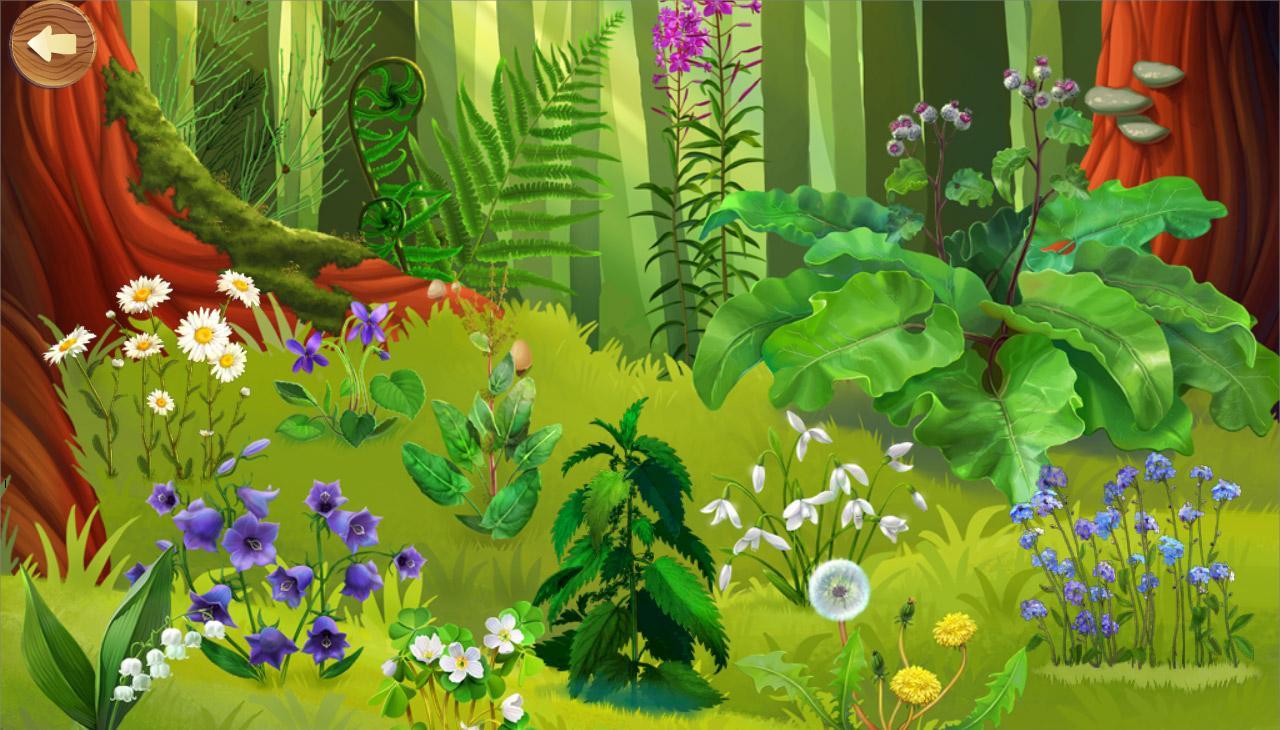 для детей картинка лес