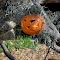 Cat Pumpkin.png