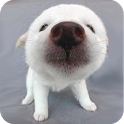 Dog sniffs screen icon