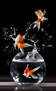 Gold Fish Live Wallpaper 1