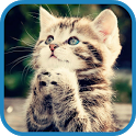 Pet Kitty Rescue icon