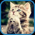 Pet Kitty Rescue icon