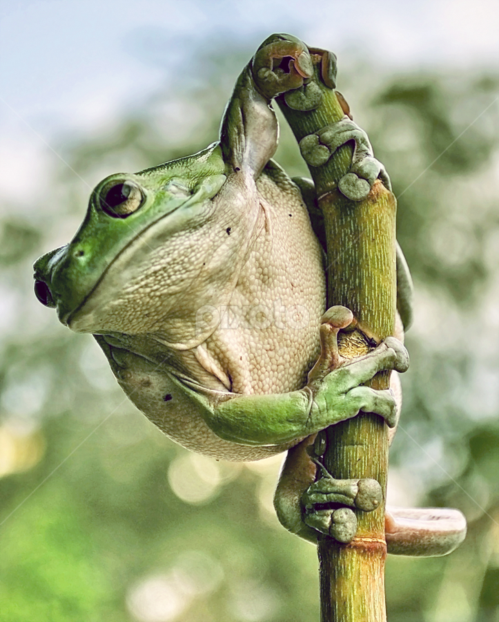 by Vray Vectra - Animals Amphibians