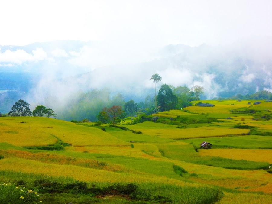 Rice fields by Bogdan Penkovsky - Landscapes Travel ( greenish, walking, rice, loneliness, fields )