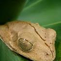 Hammer Frog