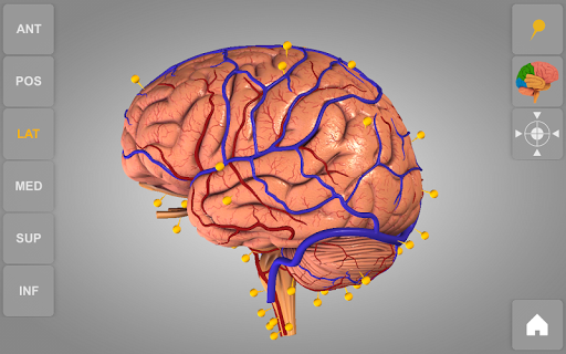 Brain 3D Anatomy Lite