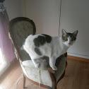 gato (es) cat (en)