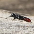 Orussid wasp