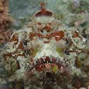 Bandtail Scorpionfish