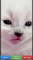Screenshot of Pretty Pink Color HD Wallpaper