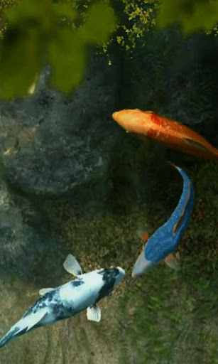Koi Fish 1 live wallpaper
