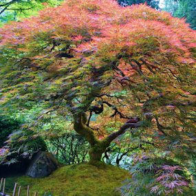 The Japanese Maple by Bridgette Rodriguez - Nature Up Close Trees & Bushes ( forests, earthly, japanese garden, jade, green, mood, japanese, scenic, relaxing, revive, maple tree, tree, nature, emotions, trees, meditation, the mood factory, garden, renewal, natural, inspirational )