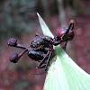 Ant Parasite Fungus