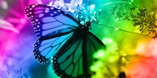 Amazing Butterflies LWP