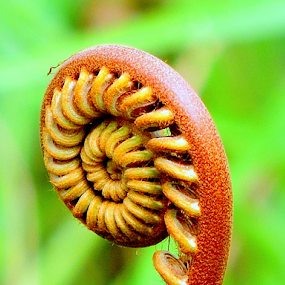 Golden curls by Yusop Sulaiman - Nature Up Close Other plants (  )