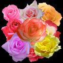 A8 Rose Slot Machine icon