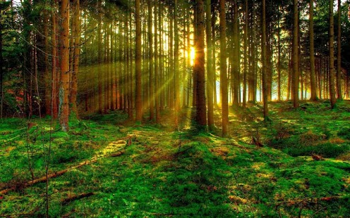 Green Forest Wallpaper Android Apps on Google Play