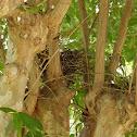 Unfinished Bird's Nest