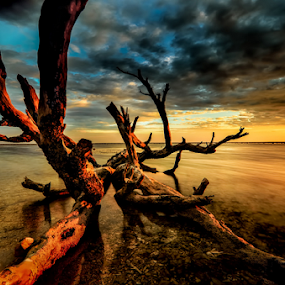deadwood of gili by Raung Binaia - Landscapes Waterscapes ( sky, sunset, deadwood, beach )