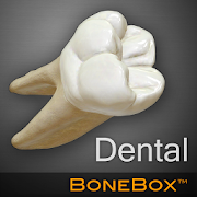 App BoneBox™ - Dental Lite APK for Windows Phone