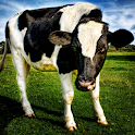 Cow Wallpaper icon