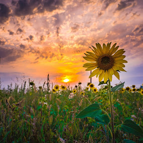 by Cornelius D - Flowers Flowers in the Wild