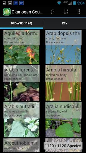 1250 Alberta Wildflowers