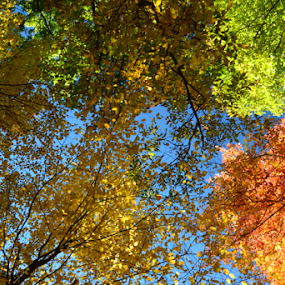 color from above by Eddy Dufault - Nature Up Close Trees & Bushes