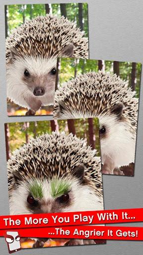 Angry Hedgehog Free