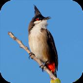 bird sounds from Thailand