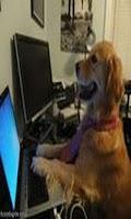 Screenshot of Crazy Dogs