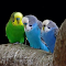 Birds_5_Images.png