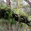 Tiny Tree fern