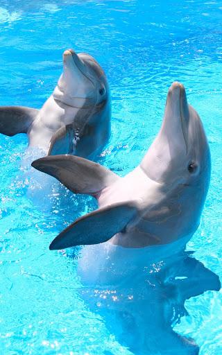 海豚HD 動態壁紙