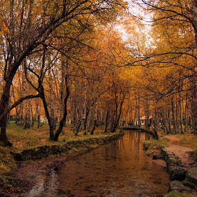 covao by Ed  von Ems - Landscapes Forests