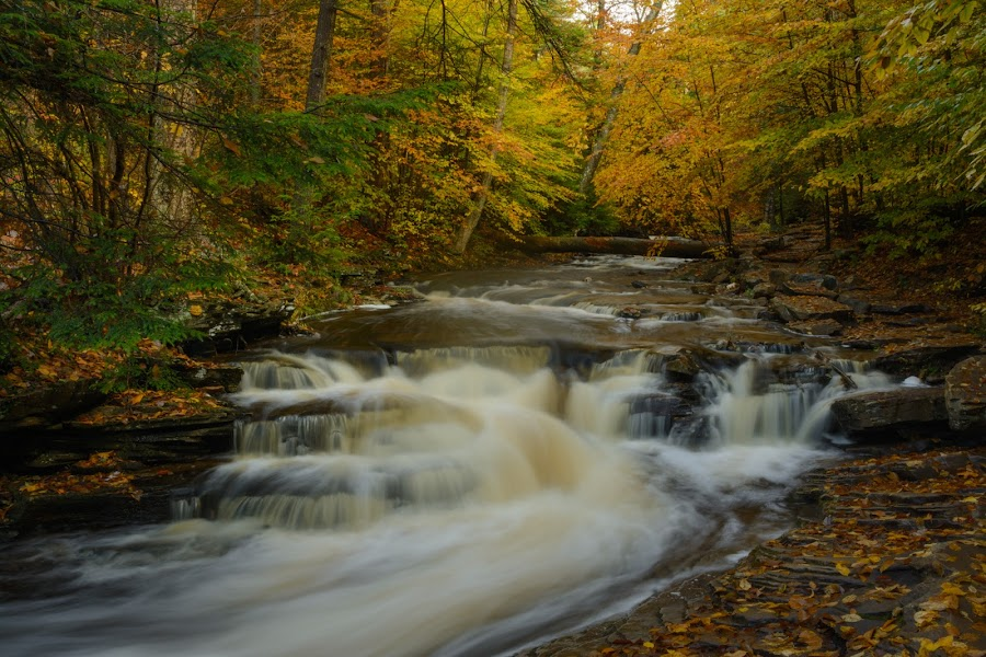 Ricketts Glen by Clare Kaczmarek - Landscapes Waterscapes ( autumn, pa state parks, sullivan county, forest, streams, ricketts glen )