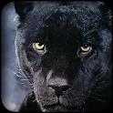 黑豹壁纸 icon