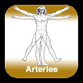Anatomy - Arteries