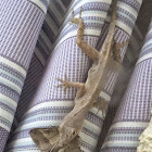 Brown Anole  (and its lunch yum yum)