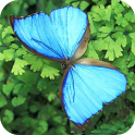 Butterfly - PuzzleBox icon