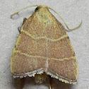 Parachma Moth