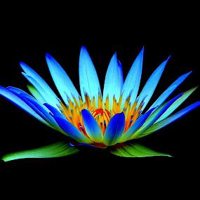 the blue lotus flower by Zulfikar Achmad - Flowers Single Flower