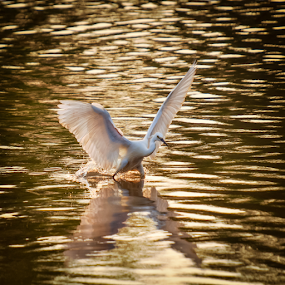 X  by Mahdi Hussainmiya - Animals Birds ( back lighting, action, wildlife, hunt, reflections )