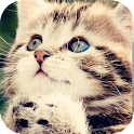 Son chat Kitty sonore icon