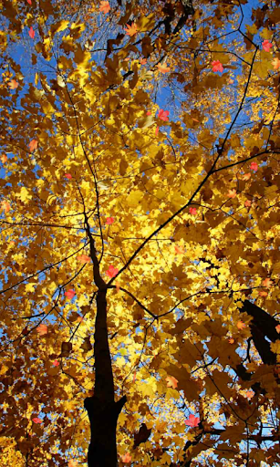 Autumn Wallpaper screenshots 6