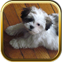 Shih Tzu Puzzle Games icon